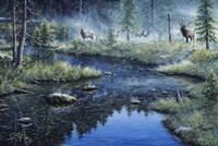 Misty Morning Fine Art Print
