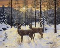 Evening Silence Fine Art Print