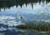 Blue Reflections Fine Art Print