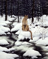 Cougar Fine Art Print