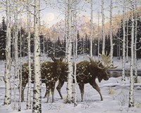 Forest Twilight Fine Art Print