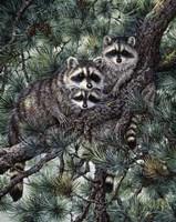 Racoons Fine Art Print
