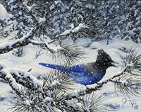 Winter Jay Framed Print