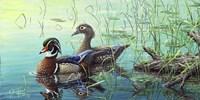 Wood Ducks Fine Art Print