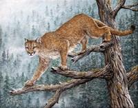 High Climber Fine Art Print
