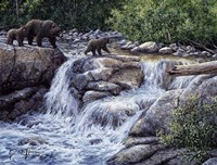 Entiat Falls-Grizzly Family Fine Art Print