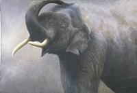 Asian Elephant Dusting Fine Art Print