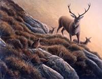 Deer And Grouse Fine Art Print