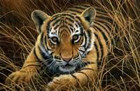 Tiger Cub Fine Art Print