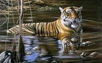 Cooling Off Bengal Tiger Fine Art Print