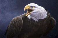 Cry Of The Eagle Fine Art Print