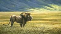 His Domain Lion Fine Art Print