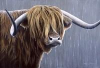 Highland Bull Rainy Day Fine Art Print