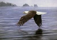 Low Flight Bald Eagle Fine Art Print