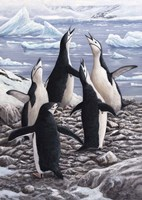 Chorus Chinstrap Penguins Fine Art Print