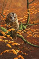 Autumn Tawny Owl Fine Art Print