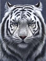 White Tiger Ghost Fine Art Print