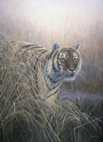 Tiger At Dawn Fine Art Print