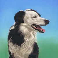 Collie Jud Fine Art Print