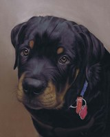 Rottweiler Solo Fine Art Print