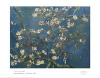 Almond Blossom Fine Art Print