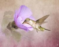 A Taste of Nectar Hummingbird Fine Art Print