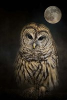 Barred Owl And The Moon Fine Art Print