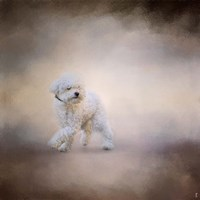 Bichon On The Go Fine Art Print