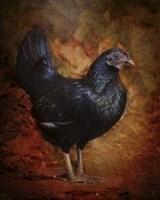 Black Bantam Chicken Fine Art Print