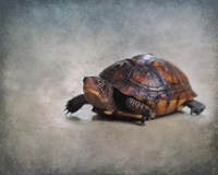 Box Turtle Portrait Fine Art Print