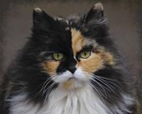 Calico Cat Portrait Fine Art Print