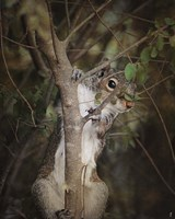 Camera Shy Squirrel Fine Art Print