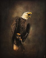 Crying for the Lost Bald Eagle Fine Art Print