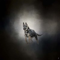 German Shepherd Puppy Feet First Fine Art Print