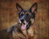 German Shepherd Fine Art Print