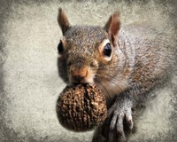 Gray Squirrel With Nut Fine Art Print