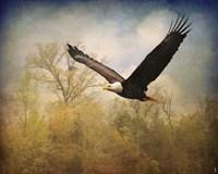 Monarch Of The Skies Bald Eagle Fine Art Print