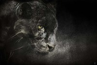Out Of The Shadows Black Leopard Fine Art Print
