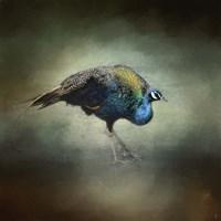 Peacock 10 Fine Art Print