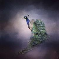 Peacock 11 Fine Art Print