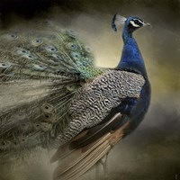 Peacock 5 Fine Art Print