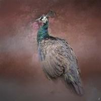 Peacock 7 Fine Art Print