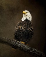 Portrait Of An Eagle Fine Art Print