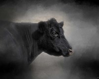 Portrait Of The Black Angus Fine Art Print