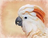 Salmon Crested Cockatoo Portrait 1 Fine Art Print