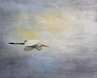 Silent Flight Great White Egret Fine Art Print