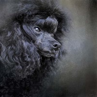 Snack Spotter Toy Black Poodle Fine Art Print