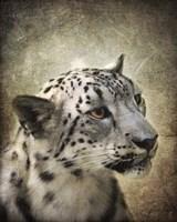 Snow Leopard Portrait Fine Art Print