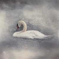 Swan Storm Fine Art Print