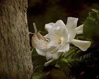 The Scent Of The Gardenia Fine Art Print